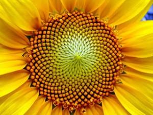 Sudut Emas dan Aplikasinya di Alam